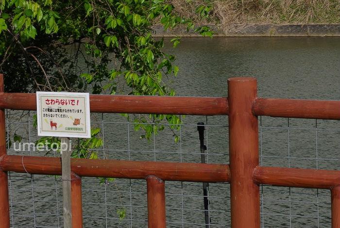 川遊びはできない
