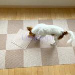 犬 マット ブログ