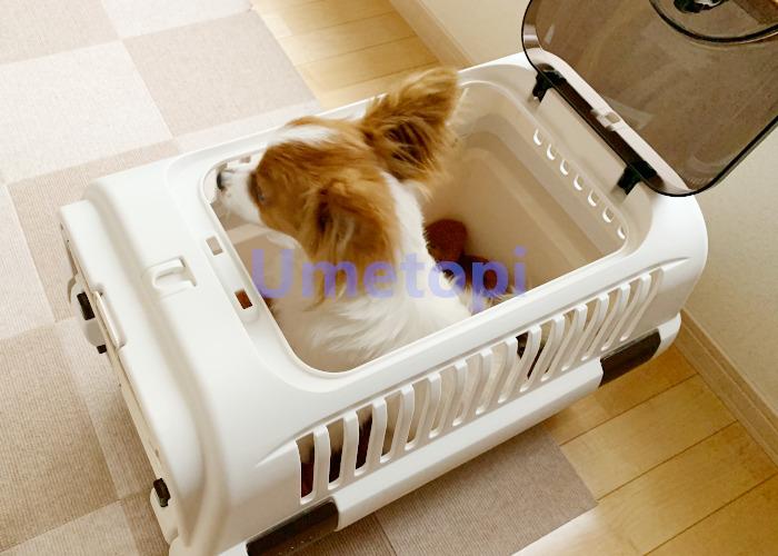 小型犬 キャリー